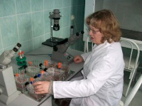 Лаборант-исследователь С.А.Мовчан за просмотром  культур клеток